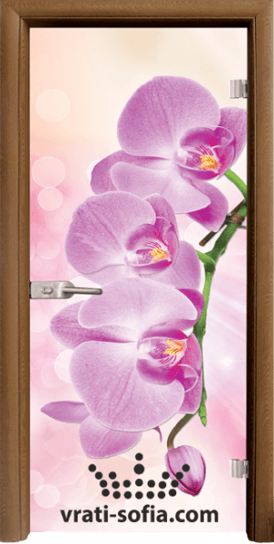 Print G 13 3 Pink C